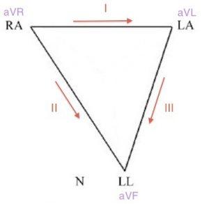 Einthoven üçgeni