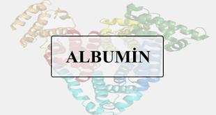 albumin nedir